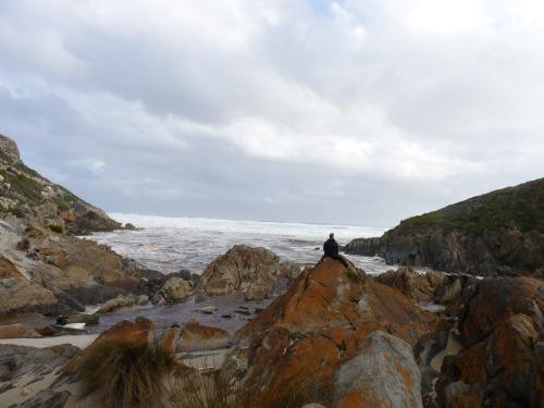 Kangaroo Island Highlights Day Tour
